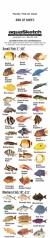 AquaSketch Single Color Flordia ID Scroll - Product Image