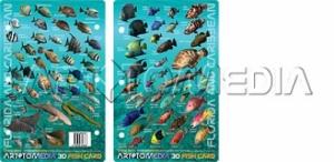 Florida & Caribbean Fish ID Card - Product Image