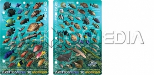 Florida Keys & Caribbean Fish ID 3D Dive MAP - Product Image